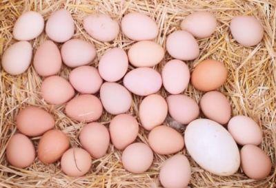 Doğal Beç Tavuğu Yumurtası (1 adet)