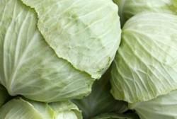 Şaban Burhan - Organik Beyaz Lahana (1,5 kg)