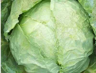 Organik Beyaz Lahana (850 gr)