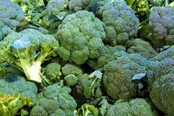 Doka Organik - Organik Brokoli (500 gr)