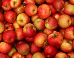Gökan İpek - Organik Elma (kg)