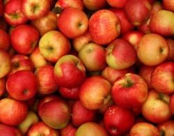 Satılmış Divrik - Organik Elma (kg)
