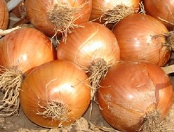 Hayrettin Aksoy - Organik Kurusoğan (kg)