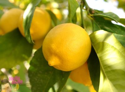 Organik Limon (kg)