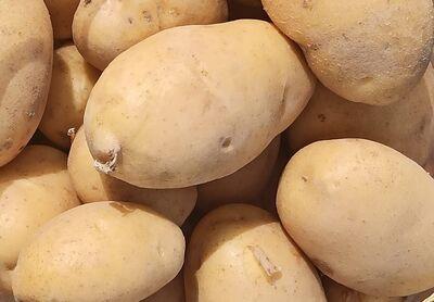 Organik Taze Patates (kg)