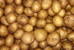 Hayrettin Aksoy - Organik Patates (kg)