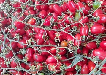 Organik Şeker Çeri Domates (500 gr)